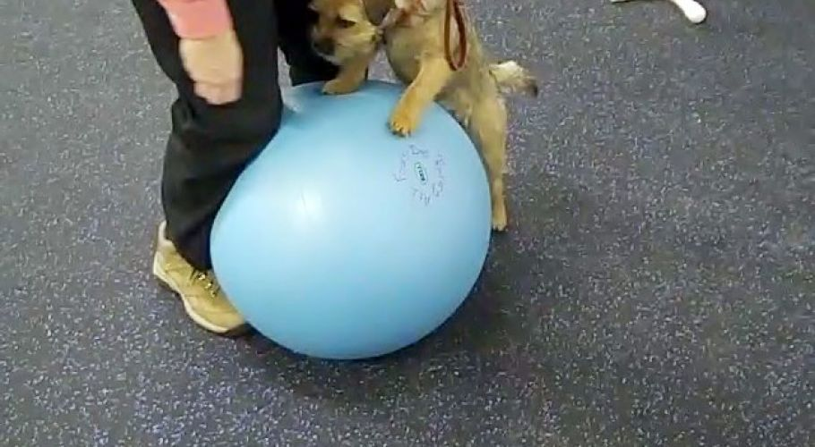 ghilley the border terrier gets a workout 20100117 1087583916